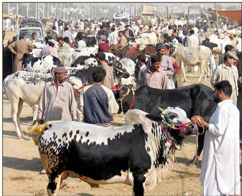 Establishment of makeshift cattle markets in the city banned