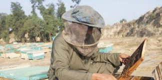 Adnan Ahmad inspects dying bees at his farm in Nowshera district. PHOTO: Hidayat Khan