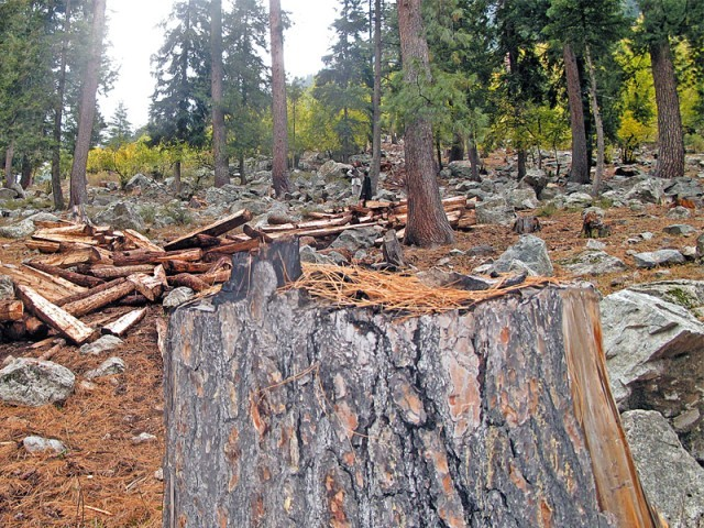 CM takes notice of deforestation in Swat
