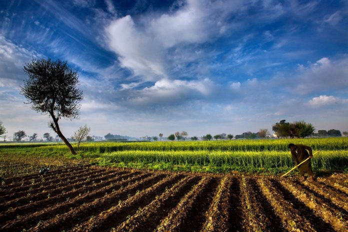 Food security: Biodiversity 'hot spots' under threat in Asia-Pacific