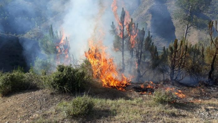 Senate body on climate Change expresses concern over forests fires