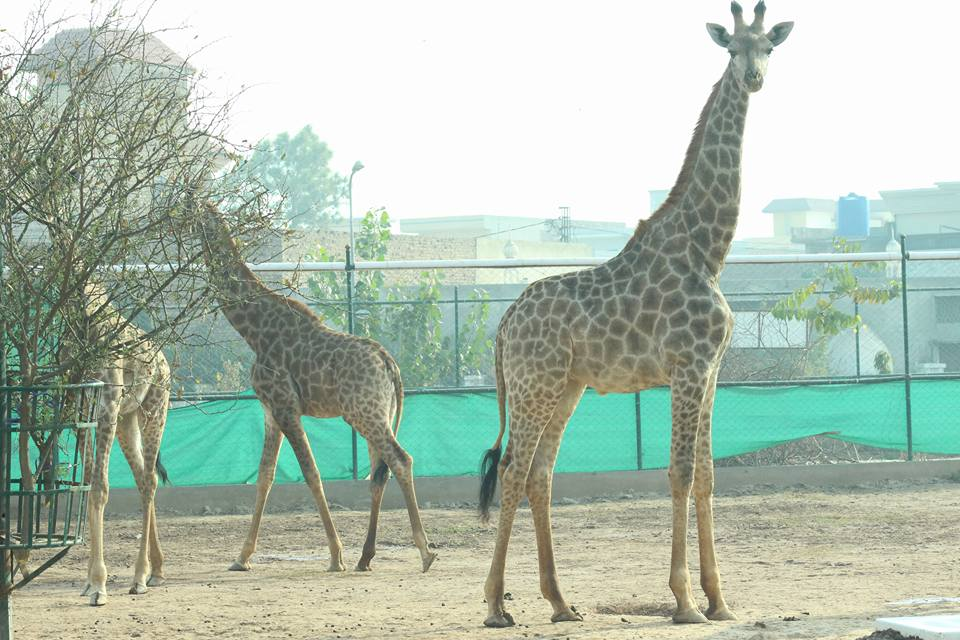 Peshawar Zoo - A great choice for family outing
